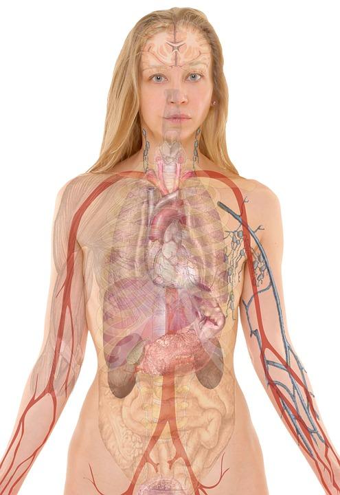 anatomie transparence soigner-ma-sante.fr